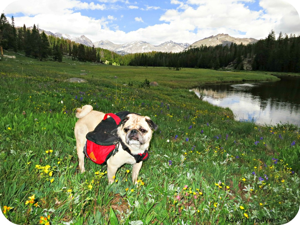Pug Backpacking