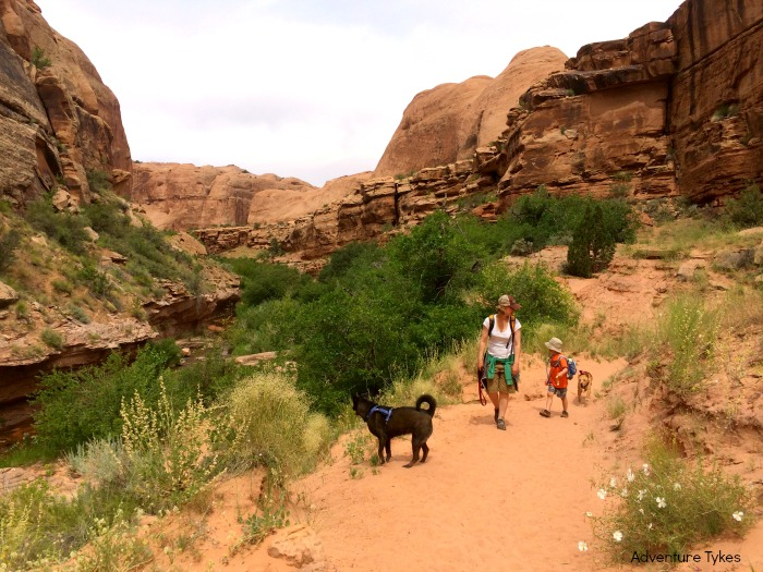 5 hikes in Moab for kids - Negro Bill Canyon, Moab, UT